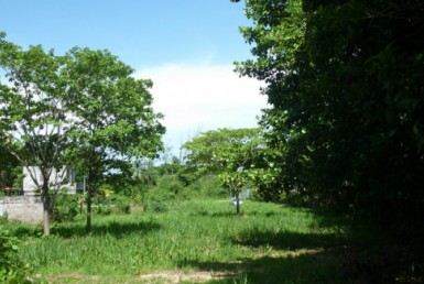Toco-Land-For sale