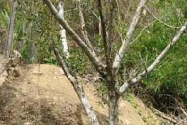 Maraval-Land-For sale